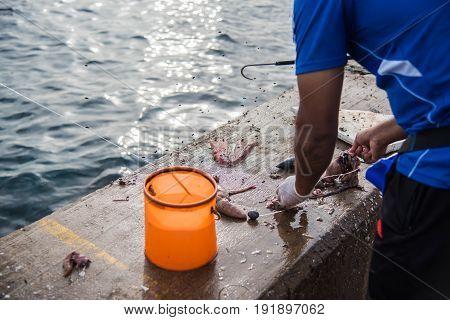 Fresh Fish Meat For Fishing Bait