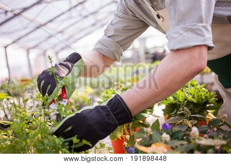 Detail of a gardener pruning a plant