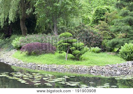 Japanese Garden exotic plants bonsai; Wroclaw Poland. The Japanese Garden was founded in 1909-1913