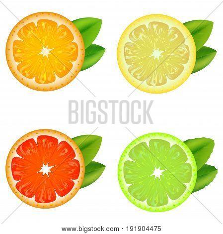Realistic Detailed Citrus Fruits Set with Leaves Natural Fresh Food Orange, Tangerine, Lemon and Lime. Vector illustration