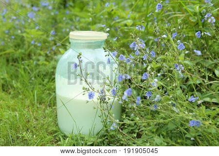 Natural raw milk in jar. Jar of rustic fat cow's milk in grass.