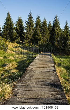 Wooden path ending somewhere in forest. View emits purpose full of hope and good.