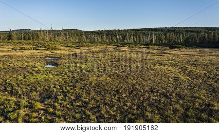 Big moorland in nice nature during sunset. Clear blue sky in background.