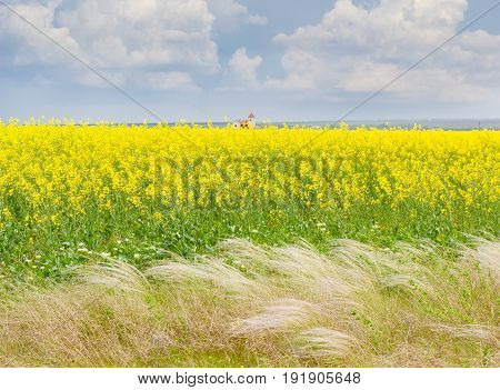 Field of the blooming rapeseed with feather grass in the foreground against a background of the sky with clouds