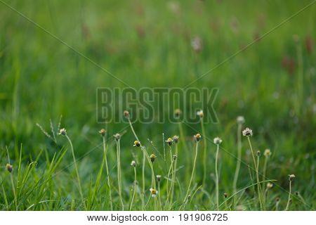 Green Grass Flower Field