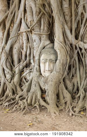 Wat Mahathat, Ayutthaya Province,Thailand. Head of the Buddha, with tree trunk and roots growing around it.