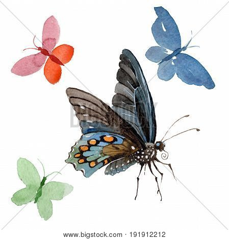 Watercolor butterfly tender insect, intresting moth, isolated wing illustration. Butterfly names: swallowtail, monarch, queen. Aquarelle for background, wrapper pattern, frame or border