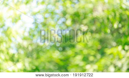 Green Nature Blur Bokeh Background
