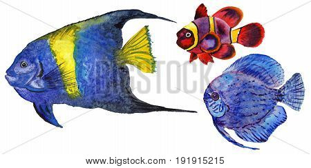Watercolor aquatic underwater colorful tropical fish set. Red sea and exotic fishes inside. Aquarelle elements for background, texture, wrapper pattern.