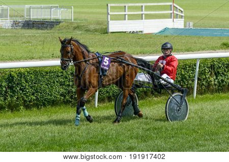 WROCLAW, POLAND - JUNE 18: Raya Perrine horse on the race for 8-year-old and older trotting French on 18 June 2017 in Wroclaw, Poland. This is an annual race on the Partenice track open to the public.