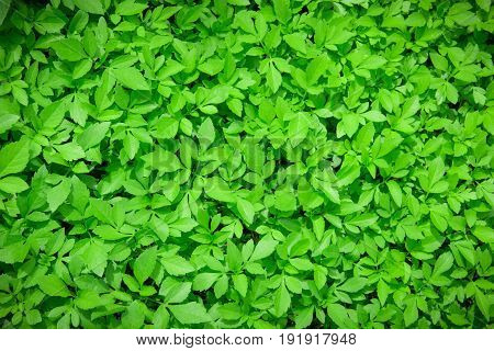 green leaf ,natural green for your work background