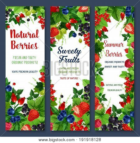Berries banners of fresh natural fruits. Red and black currant or raspberry, garden cherry and gooseberry. Vector farm grown gooseberry, blueberry or blackberry and cranberry berry for organic market