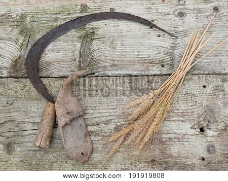 Bunch of mown wheat ears with vintage handmade reaper hook sickle on wooden board
