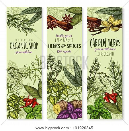 Herbs and spices banners for shop or seasonings market. Vector organic sage, bay leaf and thyme or basil and peppermint. Natural herbal spicy ginger, oregano and chili pepper or tarragon and rosemary