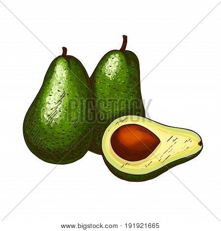 Avocado fruit sketch. Vector isolated icon of fresh tropical avocado fruit in whole and cut slice for jam and exotic juice drink product label or grocery store, shop and farm market design
