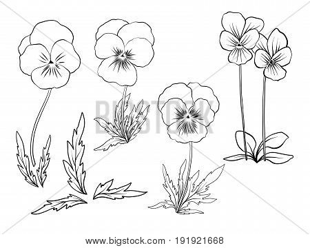 Violet flowers. Set of outline flowers.Stock line vector illustration. Outline hand drawing coloring page for coloring book.