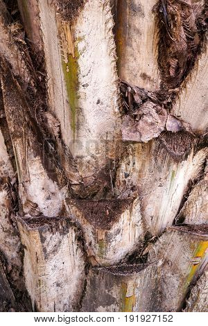 close up dry bark palm tree texture