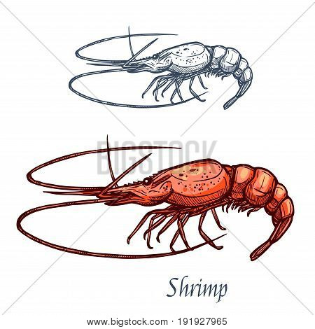 Shrimp or prawn sketch vector icon. Saltwater crayfish crustaceans marine fauna species with claws. Isolated symbol for seafood restaurant sign or emblem, fishing club or fishery market