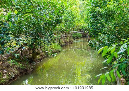 Small Canal In Mekong Delta.