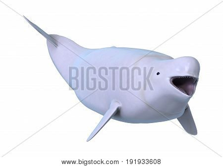 3D Rendering Beluga White Whale On White