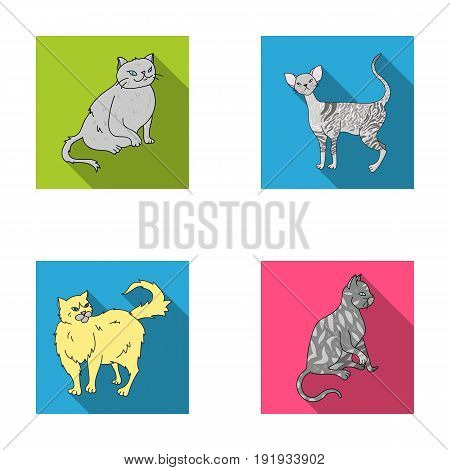 Persian, Cornish rex and other species. Cat breeds set collection icons in flat style vector symbol stock illustration .