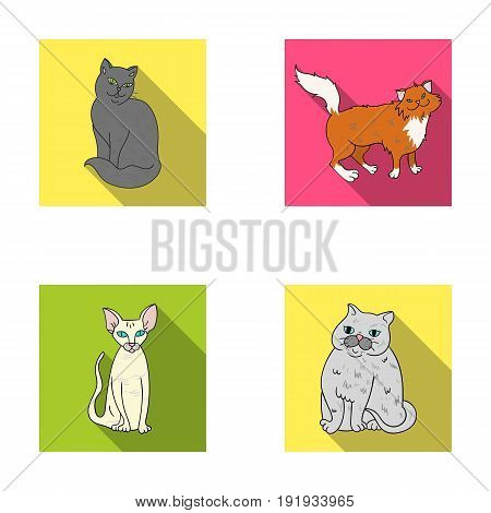 Sphinx, nibelung, norwegian forest cat and other species. Cat breeds set collection icons in flat style vector symbol stock illustration .