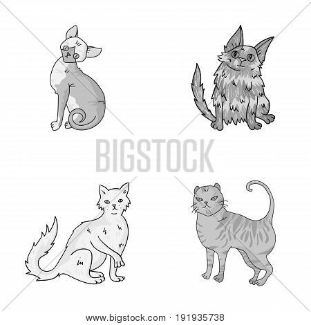 Turkish Angora, British longhair and other species. Cat breeds set collection icons in monochrome style vector symbol stock illustration .