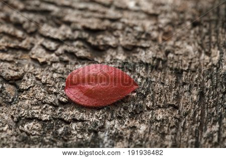 Tiny Red Leaf