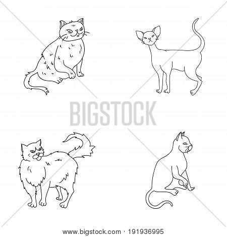 Persian, Cornish rex and other species. Cat breeds set collection icons in outline style vector symbol stock illustration .
