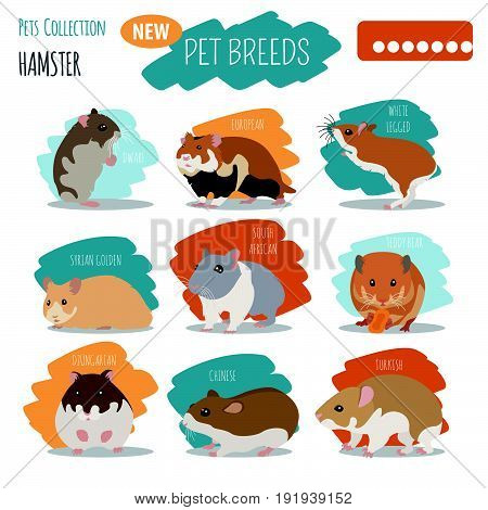 Rat Breeds Icon Set Flat Style Isolated On White. Pet Rodents Collection. Create Own Infographic Abo