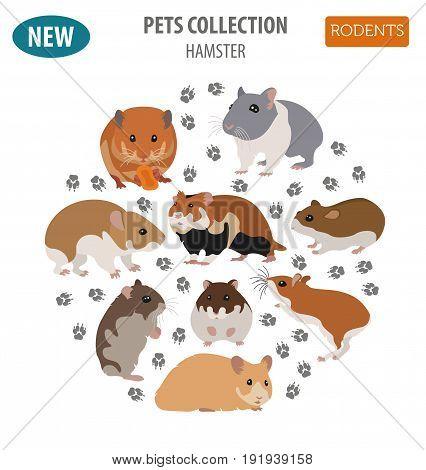 Pets_rodents_rat_3