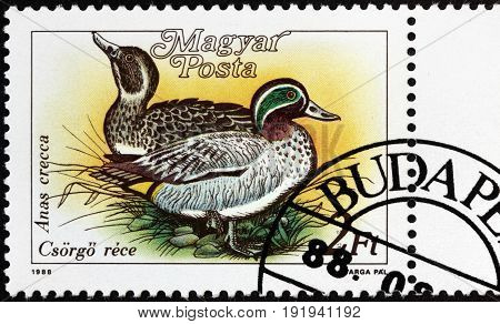 LUGA RUSSIA - APRIL 26 2017: A stamp printed by HUNGARY shows Eurasian Teal - a common and widespread duck which breeds in temperate Eurasia and migrates south in winter circa 1988