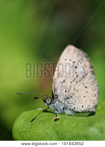 Detailed closeup of an exotic lepidoptera resting