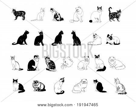 cat collection clipart. cartoon character . Vector Illustration.