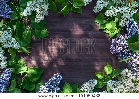 lilac is white and lilac. Vignette of lilac against the backdrop of a green garden. Background. Wiht Place for text