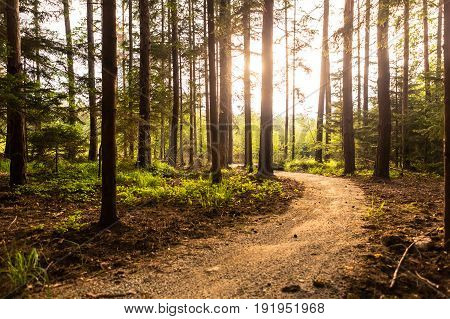 Hiking path and sunset in beautiful woods panoramic view inspirational summer landscape in forest. Walking footpath or biking path dirt road.