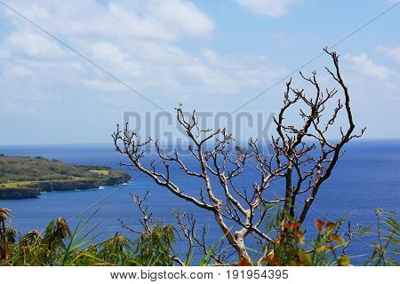 Bare branches of a tree overlooking Laolao Bay A bare tree without leaves overlooking the beautiful coastal view of Laolao Bay in Saipan, Northern Mariana Islands