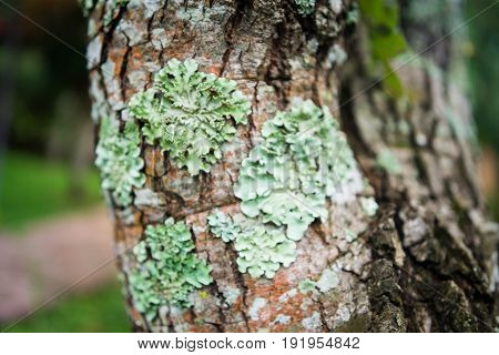 Lichen in forest, mossy rain forest, Soft focus