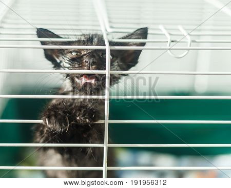 Homeless animals series. Kitten looking out from behind the bars of his cage.