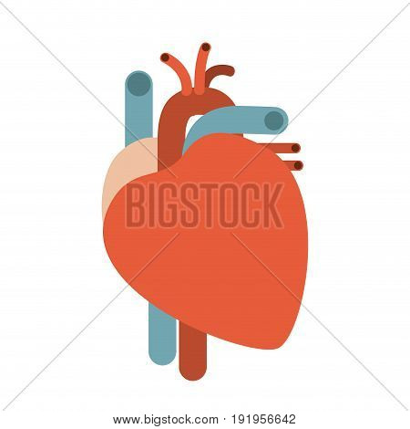 colorful silhouette without contour heart system human body vector illustration