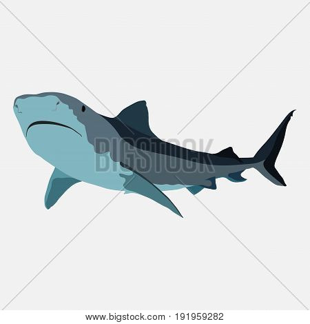 shark on a white background shark attack the danger in the ocean warning of danger marine fish flat design image