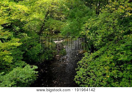 Thick foliage on trees with a winding stream in the Scottish Highlands.