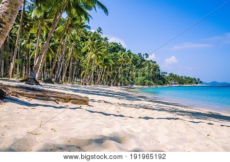 Sandy Beach with Palm trees, El-Nido, Palawan Island, Philippines