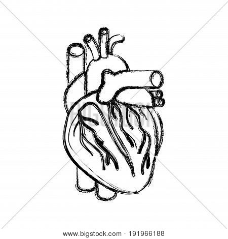 blurred realistic silhouette heart system human body vector illustration