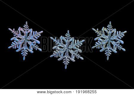 Three color variants of same snowflake isolated on black background. Macro photo of real snow crystal: stellar dendrite with fine hexagonal symmetry, thin, long arms and many side branches.