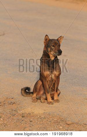 peaceful street dog in Laos, Southeast Asia