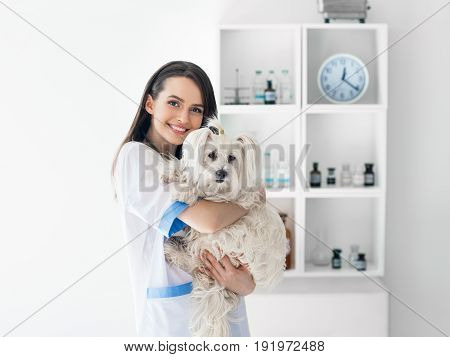 Beautiful Smiling Veterinarian Doctor Holding Cute White Dog