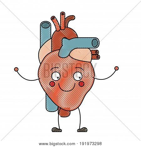 color crayon silhouette caricature circulatory system with heart vector illustration