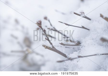 Branches Reaching Out Of Snow Cristalls