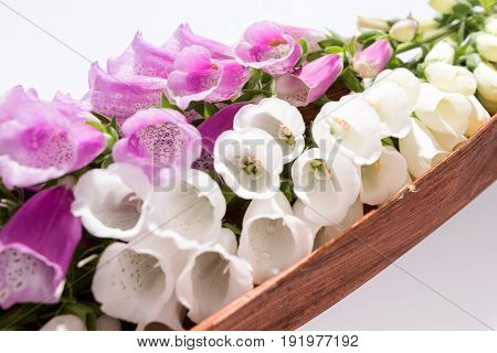 Flowers of digitalis on a white background
